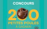 200 petites poules en chocolat